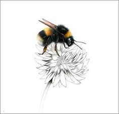A bumblebee, also written bumble bee, is any member of the bee genus Bombus, in . - List of the most beautiful tattoo models Bee And Flower Tattoo, Bee On Flower, Bumble Bee Tattoo, Bee Drawing, Bee Painting, Clover Tattoos, Insect Art, Bee Art, Bugs And Insects
