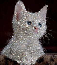 Ok guys I was not prepared for this, but looking at how crazy things are going with an average of 100 emails for prints Boujee Aesthetic, Aesthetic Vintage, Aesthetic Photo, Aesthetic Pictures, Glitter Kunst, Glitter Art, Sparkles Glitter, Glitter Bomb, Diamond Glitter