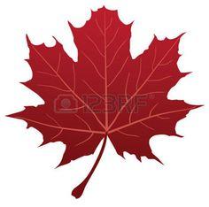 dibujos de hojas de otoño: vector de hoja de arce rojo