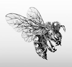 Ink Drawing Gorgeous Pen and Ink Wildlife by Si Scott insects illustration black and white animals - Art, design, and visual culture. Ink Illustrations, Art And Illustration, Si Scott, Dibujos Tattoo, Kunst Tattoos, Bee Art, Insect Art, Ink Drawings, Black And White Drawing