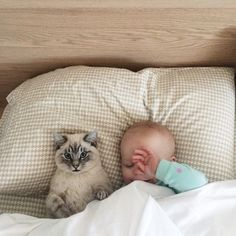 Down for our afternoon catnap... (by Jessica Kesti)