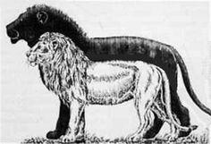 Соотношение размеров современного льва (обозначеный белым цветом) (редко 300 кг) и Panthera (Leo)atrox Leidy (обозначеный черным цветом) (около 500 кг)