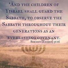Shabbat Shalom and Shavua tov Everyone. Sabbath Rest, Happy Sabbath, Sabbath Day, Bible Quotes, Bible Verses, Scriptures, Faith Quotes, Motivational Quotes, Sabbath Quotes