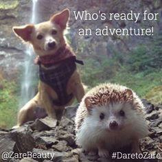 """How cute is this!  Tag your adventure buddy  #DaretoZaře 