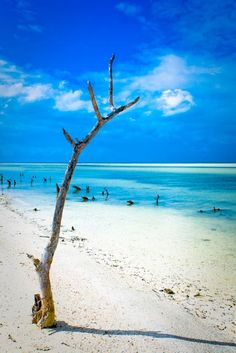 Holbox Island Mexico-Been there will go back!
