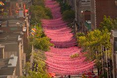 Alison Slattery Photography: #montreal #gayvillage #pride #travel #stcatherine #pinkballs