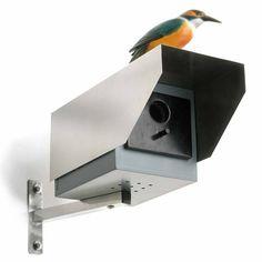 sneaky bird house