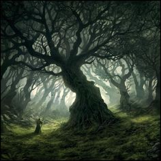 Thick, twisting branches spawn from strong trunks, working in tandem with the fog to obscure the path ahead