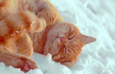 Snow bath!