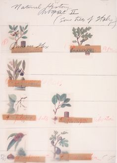 Cy Twombly, Natural History II (Some trees of Italy), (8 prints), 1976 Lithography 75 x 56 cm