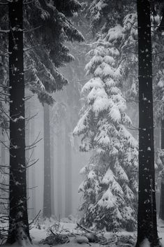 deep winter (by danysecrieru) Deep Winter, Winter Forest, Winter Szenen, I Love Winter, Winter Magic, Snowy Forest, Winter Trees, Dark Forest, Snow Scenes