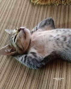 people are boring - your daily dose of funny cats - cute kittens - pet memes - pets in clothes - kitty breeds - sweet animal pictures - perfect photos for cat moms Cute Cats And Kittens, I Love Cats, Crazy Cats, Cool Cats, Kittens Cutest, Cute Funny Animals, Funny Animal Pictures, Cute Baby Animals, Animals And Pets