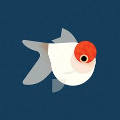 A red cap oranda goldfish! Goldfishes do not have stomachs, but one looong instestine. They are also able to recognize faces. Botanical Illustration, Digital Illustration, Graphic Illustration, Fish Vector, Vector Art, Oranda Goldfish, Branding, Fish Art, Easy Drawings