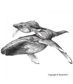 drawing humpback whale - Hledat Googlem
