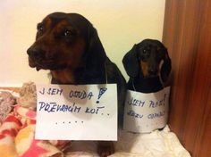 Good Jokes, Funny Jokes, Daschund, Animals And Pets, Bff, Haha, Funny Pictures, Barbie, Thoughts