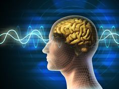 The idea that one side of the brain is dominant is a myth, researchers say.