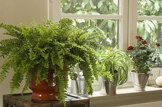 Voici 24 plantes dépolluantes pour une maison saine et écologique.