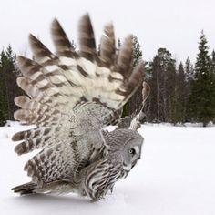Amazing Owl..