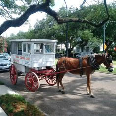 """""""Another reason to love #NOLA: The Roman Candy Man! The Cortese's have sold taffy since 1915."""" -Raymond Arroyo"""