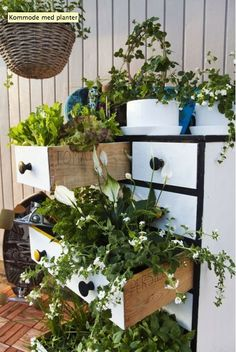 <3 Upcycled chest of drawers planter <3