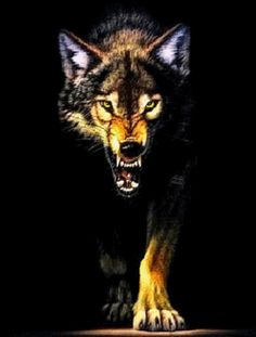 Look at this savage beast isnt he scary! This angry wolf is sure to keep anyone away from touching your phone! Easy free new live wallpaper. Arktischer Wolf, Lone Wolf, Wolf Images, Wolf Pictures, Wolf Walking, Walking Tall, Snarling Wolf, Wolf Tattoos Men, Tattoo Wolf