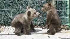 Teddy bears. They'll maul me, but still teddy bears.