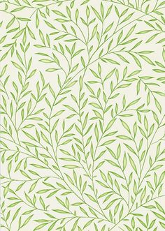 Lily Leaf Wallpaper A tiny leaf trail in green on cream