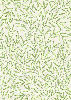 Lily Leaf Wallpaper A tiny leaf trail in green on cream