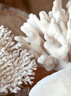 sigh, this wonderful white coral, so coastal and nautical Coastal Homes, Coastal Living, Coastal Decor, Seaside Decor, Turquesa E Coral, Beach Cafe, Shades Of White, Beach Cottages, Beach Themes
