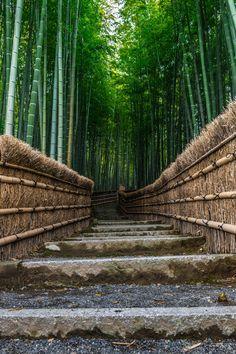 Bamboo forest walk - Arashiyama, Kyoto, Japan