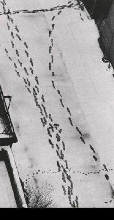"""(I dreamed the snow was you,  when there was snow)…    -Reginald Shepherd, from """"You, Therefore"""" +    [image: Andre Kertesz, Footsteps in Snow at McDougal Alley]"""