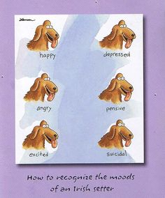 How to recognize the moods of an Irish Setter