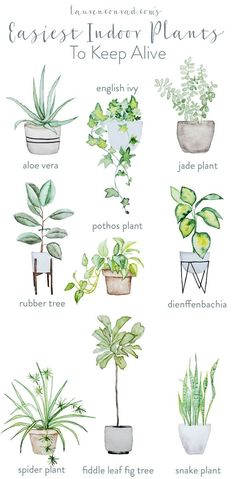 cool Déco Salon - The easiest, and prettiest, house plants to keep alive...