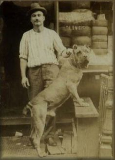 Cane corso - I wish I knew what year this picture was taken