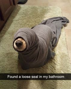 VineScope - 25 Hilarious Dog Snapchats That Are Impossible Not To Laugh At