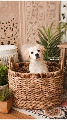 Super Cute Puppies, Cute Little Puppies, Super Cute Animals, Cute Dogs And Puppies, Cute Little Animals, Cute Funny Animals, Cute Pups, Adorable Puppies, Doggies