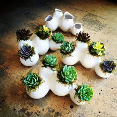by Southeast Succulents
