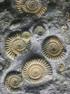.fossils