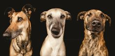 It's a Dog's World for German Photographer What happens when a photographer turns the lens on her own pets?  In the case of German photographer,Elke Vogelsang.