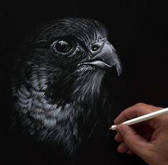 Hawk Scratch board | Artwork & Photos