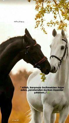 Lip Makeup Tutorial, Lips, Horses, Allah, Quotes, Photography, Animals, Quotations, Photograph