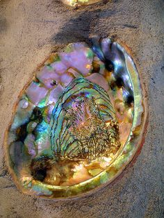 Millie, this is an Abalone shell.  It shines like a rainbow.  If I ever see one, I'm giving it to you.