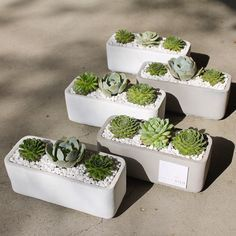 Succulent Thank You arrangements by Dalla Vita located in Santa Barbara Gardening Succulents In Containers, Cacti And Succulents, Planting Succulents, Cactus Plants, Planting Flowers, Concrete Crafts, Concrete Planters, Terrarium Cactus, Papercrete