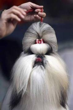 12 Extreme Animal Hairstyles - Oddee.com (extreme animal, animal hairstyle...)