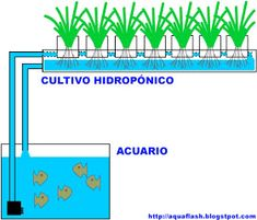 Aquaponics is a system for the production of aquatic plants and animals of . - Aquaponics is a system of production of vegetables and aquatic animals together. By taking advantag - Aquaponics Fish, Yard Design, Aquatic Plants, Fish Tank, About Me Blog, Diy Crafts, Animals, Design Ideas, Gardening