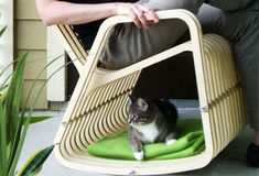 Five pet friendly furniture for you home