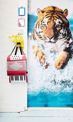 500 Best Animal Tiger Tiger Burning Bright Images Big Cats