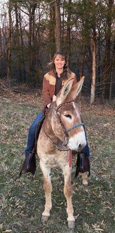 Carmack Gaited Mules - Home Mules Animal, Farm Animals, Cute Animals, Miniature Donkey, Disney Concept Art, Work With Animals, Horse Farms, Livestock, Beautiful Horses