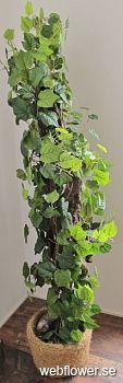 Vinranka Provance med Grapewood stam 180cm