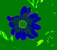 Love the blue daisy with the green background but the small hints of coloring really help make the flower stand out.